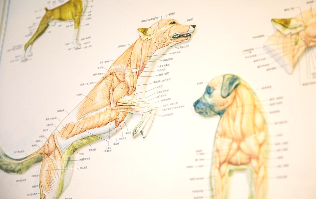 「骨の歪み」と「筋肉の歪み」の両方を整えます