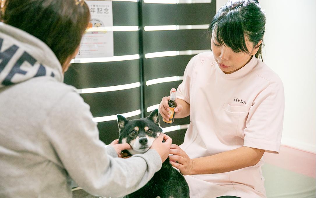 犬の自然治癒力を高める療法と予防ケアを行います